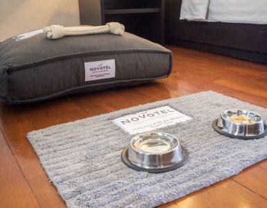 pet-friendly-hotel