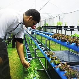 organic12-2